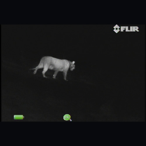 FLIR SCOUT III-240 Monocular Thermal Handheld Camera, 240 x 180 VOx, 24° x 18° NTSC FOV, 30 Hz NTSC (View of Solitary Lioness)